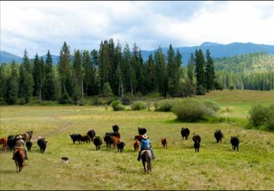 Texas.Ranch