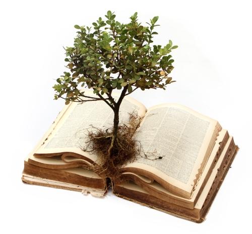 Bible.Plant