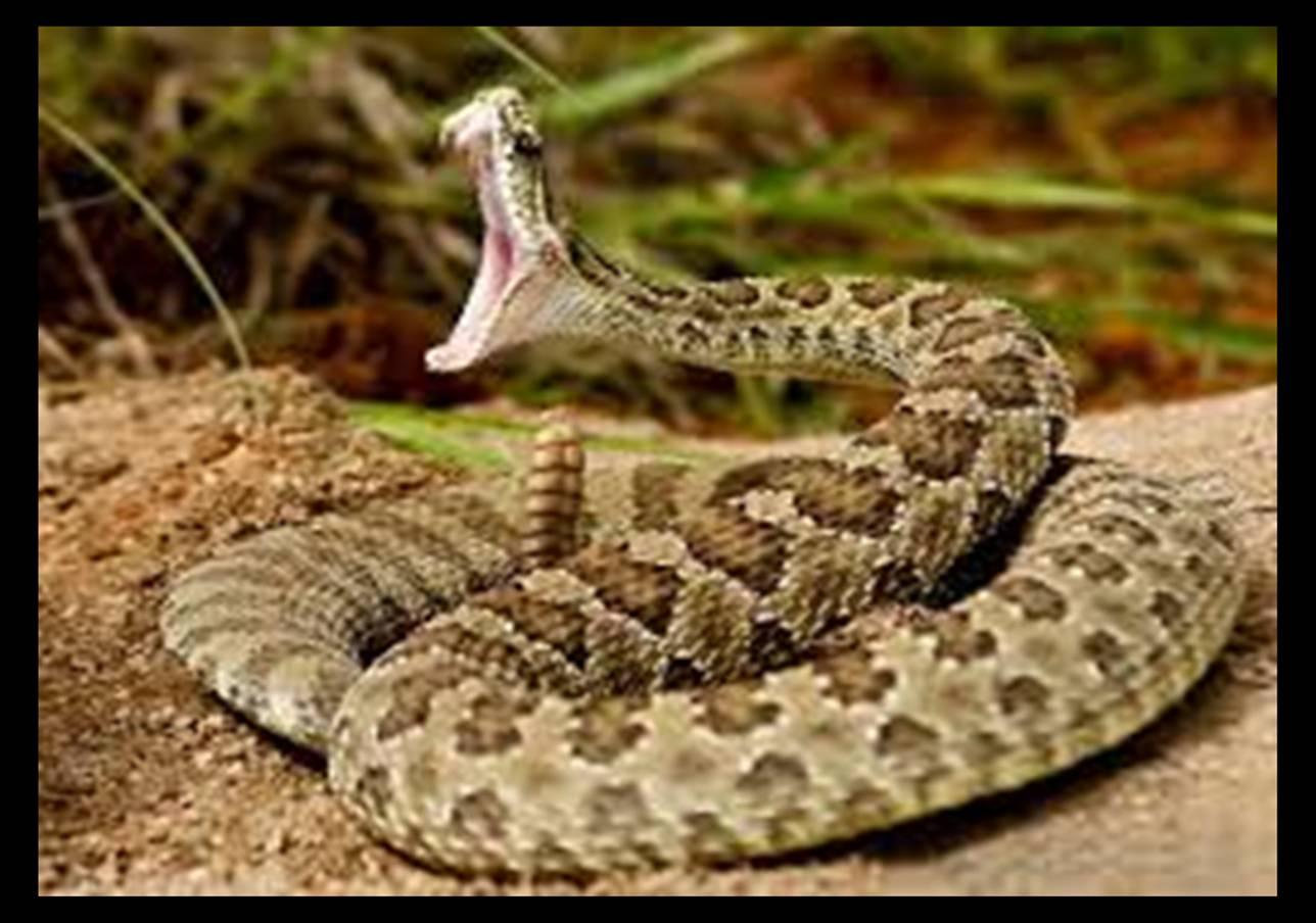 List of dangerous snakes