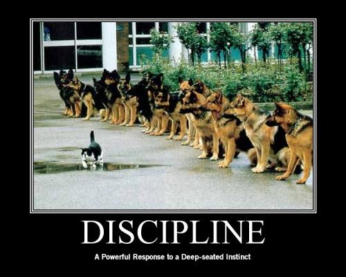 Discipline.Poster