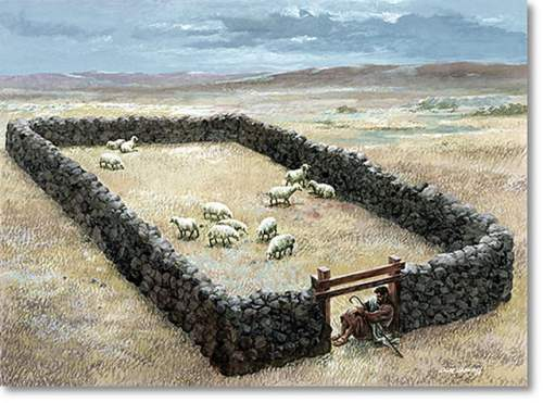Door of sheep