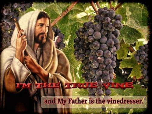 Jesus The Vine