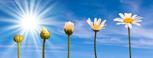 change-flowers