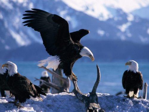 Eagles Push